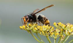 123m-horzel-dieren-insect-22-10.jpg