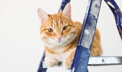 Accident domestique : comment protéger son chien ou son chat ?