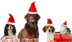 Cadeaux de Noël : n'oubliez pas votre chien ou votre chat !