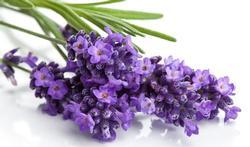 123m-lavendel-planten-24-3.jpg