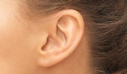 L'intérieur de l'oreille : un marqueur sexuel