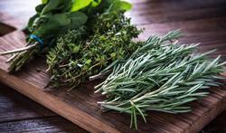 Herbes aromatiques fraîches : séchage et congélation