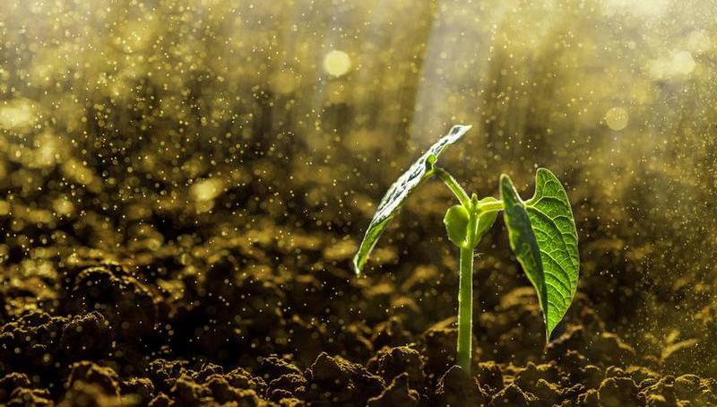 123m-planten-regen-14-11.jpg