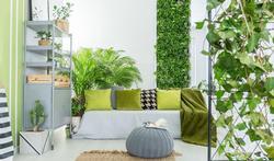 Pollution de l'air intérieur : des plantes oui, mais combien ?