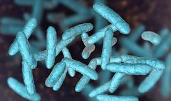 123m-probiotica-prebio-postbio-2-9-20.jpg
