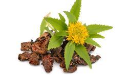 123m-rhodiola-planten-24-10.jpg