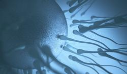 123m-sperm-20-11-19.jpg