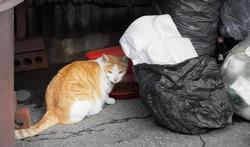 Chats : comment protéger vos sacs-poubelles ?
