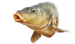 Nos médicaments : un réel danger pour les poissons