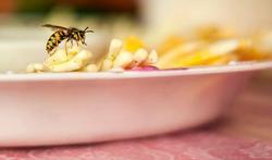 Jardin et maison : les solutions naturelles contre les insectes