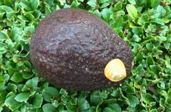 HD-avocado-kiem-.jpg