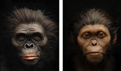 A quoi ressemblait le visage de nos ancêtres préhistoriques ?