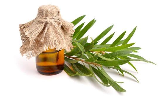 les bienfaits de l 39 huile essentielle d 39 arbre th tea. Black Bedroom Furniture Sets. Home Design Ideas