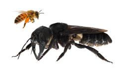 abeille11.jpg