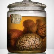 cerveauD.jpg