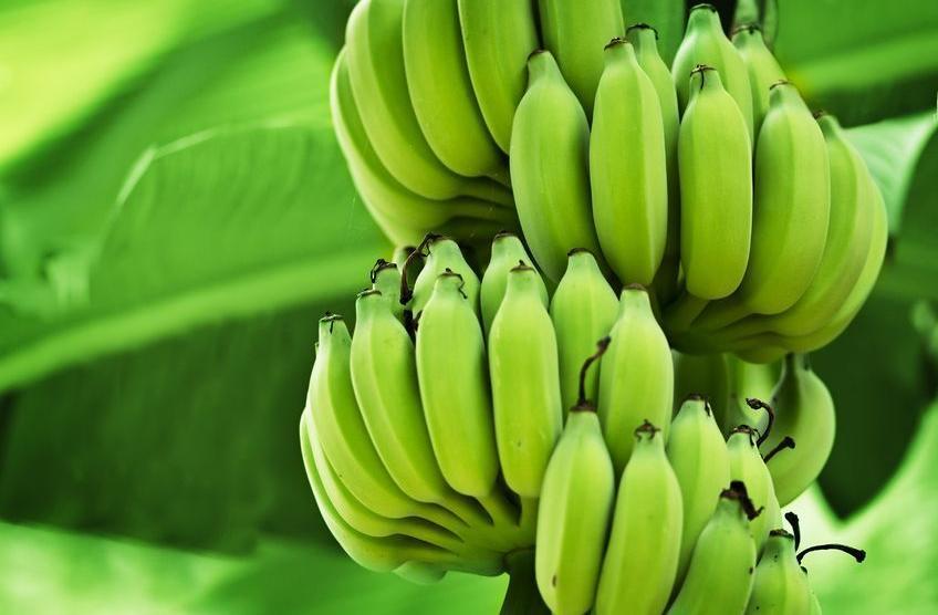 f-123-HD-bananen-gr-06-18.jpg