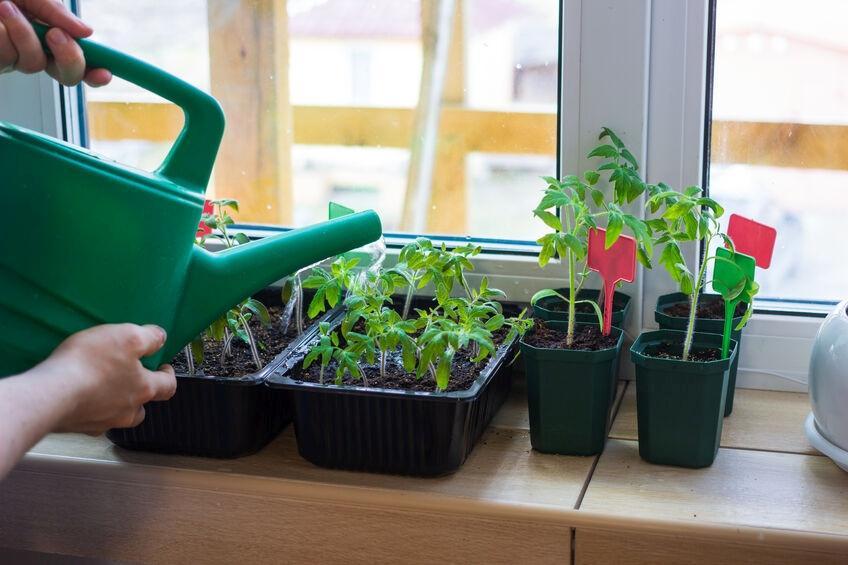 f123-h-tomaat-indoor-09-21.jpg