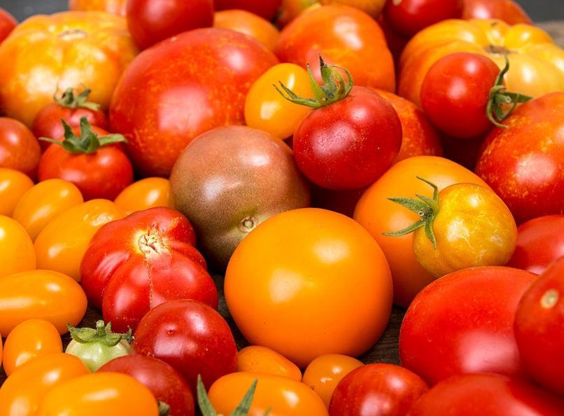 f123-h-tomaat-soort-08-20.jpg