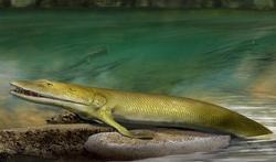 Un poisson préhistorique avec des doigts : l'origine de notre main ?