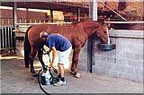 paard-melken.jpg