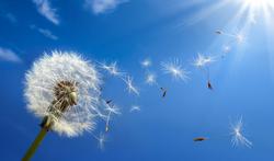 Welke geneesmiddelen helpen tegen hooikoorts en wat werkt niet?