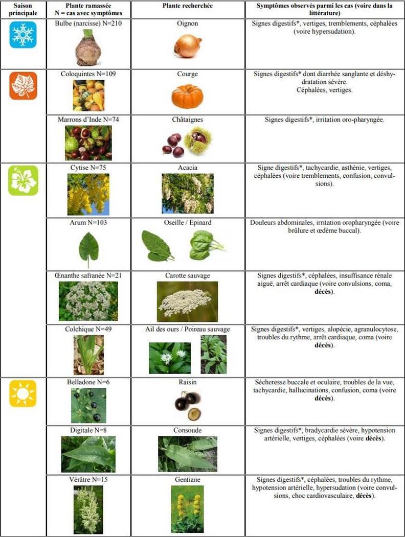 plantes1.jpg