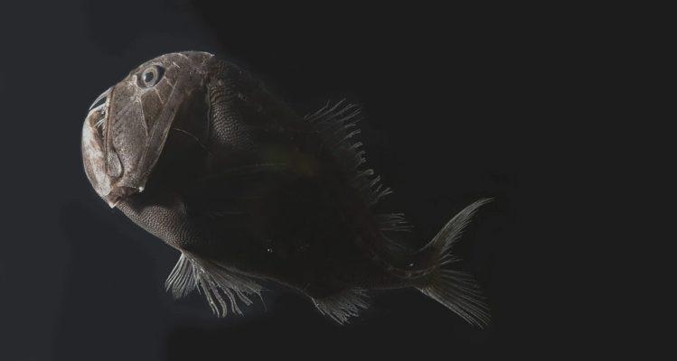 poissonnoir4.jpg