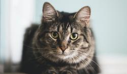 unspl-cat-21-10-21.jpg