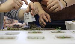 Hydroponie : comment cultiver des légumes sans terre