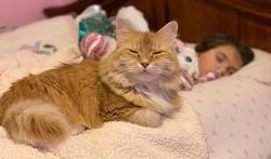 Sommeil de l'enfant : on le laisse dormir avec son chien ou son chat ?