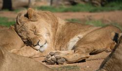 Animaux : quels sont ceux qui dorment le plus et le moins ?