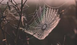 unspl-m-spin-spinnenweb-6-5-21.jpg