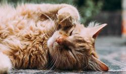 Un chat d'intérieur dort-il plus qu'un chat « sorteur » ?